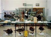 Museo di Scienze Naturali - Rosignano Marittimo