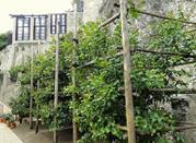 La Limonaia del Castel - Limone sul Garda
