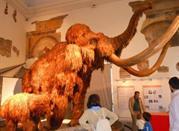 Museo di Scienze Naturali