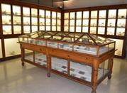 Museo Civico di Storia Naturale del Liceo Classico