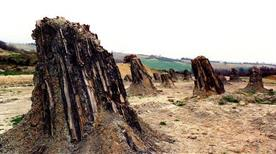 Dunarobba - foresta fossile (2.5 milioni anni)