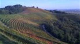Colline dell'azienda vitivinicola Aquila del Torre