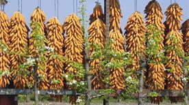 Azienda Agricola La Fattoria Ss - >Pavia di Udine