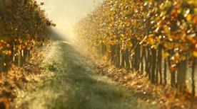 Assoc. Strada del Vino Franciacorta