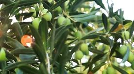 CILLI oleificio