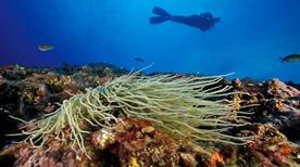 Diving Center Capo Galera - >Alghero