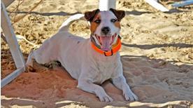 La Spiaggia di Duke - >Lignano Sabbiadoro