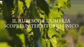 Lungarotti Giorgio - >Torgiano