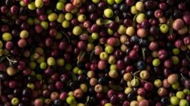 Oleificio Cericola Emilia