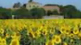 AZIENDA AGRITURISTICA PIAN DI BARCA - >Grosseto