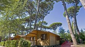Bosco Verde - >Viareggio