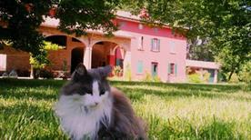 Antico Bed & Breakfast Podere Merlo in Parma - >Parma