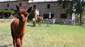 MARIDIANA ALPACA COUNTRY HOUSES - >Umbertide