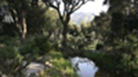 Giardino la Mortella - >Forio