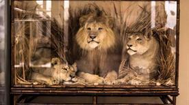 Museo di Zoologia - >Bologna