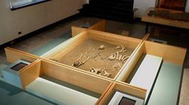 Nuovo Museo Provinciale Sannitico - >Campobasso