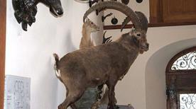 Museo regionale della fauna alpina Beck-Peccoz - >Gressoney Saint Jean