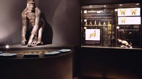 Museo Civico di Zoologia - >Rome