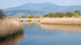 Stagni di Focognano - >Campi Bisenzio