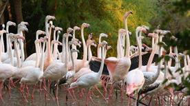 Zoo Punta Verde - >Lignano Sabbiadoro