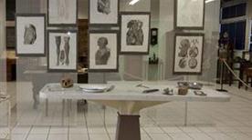 Museo Anatomico - >Siena