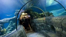 Sea Life Aquarium - >Jesolo