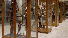 Museo dell'Istituto di Anatomia Patologica - >Padova