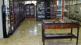 Museo Anatomico della Facoltà di Veterinaria - >Pisa