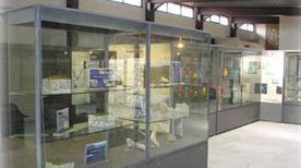 Museo Archeologico Comunale - >Frosinone