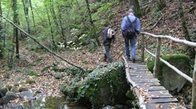 Foresta di Sant'Antonio - >Reggello