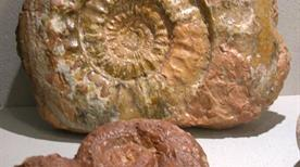 Museo del Fossile del Monte Baldo - >Brentonico