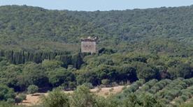 Torre Bassa - >Magliano in Toscana