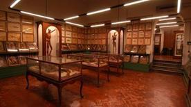 Museo Universitario di Storia Naturale e Strumentazione Scientifica - >Modena