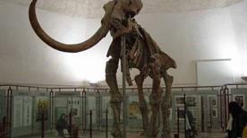 Museo Archeologico Nazionale d'Abruzzo - >Chieti