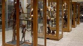 Museo dell'Istituto di Anatomia Umana Normale - >Pisa