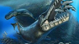 Museo Paleontologico - >Bologna