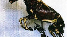 Museo di Anatomia degli Animali di interesse medico-veterinario - >Parma