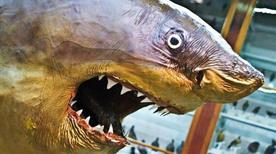 Museo di Zoologia - >Bari