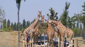 Safari Ravenna - >Savio