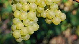 Agraria Riva Del Garda Soc. Coop. R. L. - >Riva del Garda