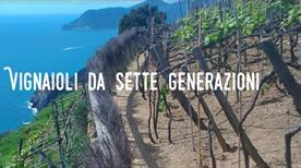 Azienda Agricola Luciano Capellini – Vin Bun  - >Riomaggiore