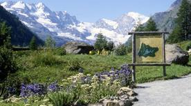 Giardino botanico alpino Paradisia - >Cogne