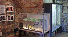 Museo Paleontologico della Rocca - >Monfalcone