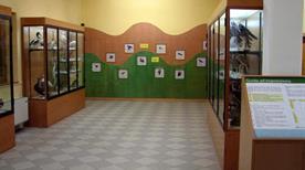 Museo Ornitologico - >Poppi