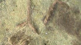 Arte incisioni rupestri - >Pallare