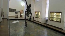 Museo di Paleontologia - >Napoli