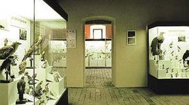 Museo Civico Ornitologico - >Lonato del Garda