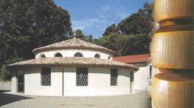Museo del Parmigiano Reggiano - >Soragna