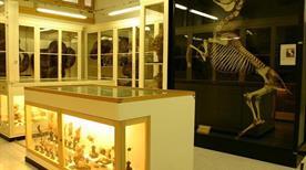 Museo di Anatomia degli Animali Domestici - >Ozzano dell'Emilia