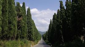 Viale dei Cipressi - >Castagneto Carducci